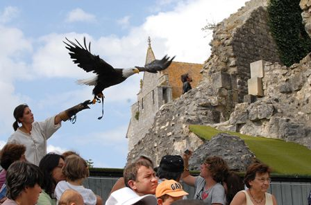 rapaces-spectacle_chauvigny.jpg
